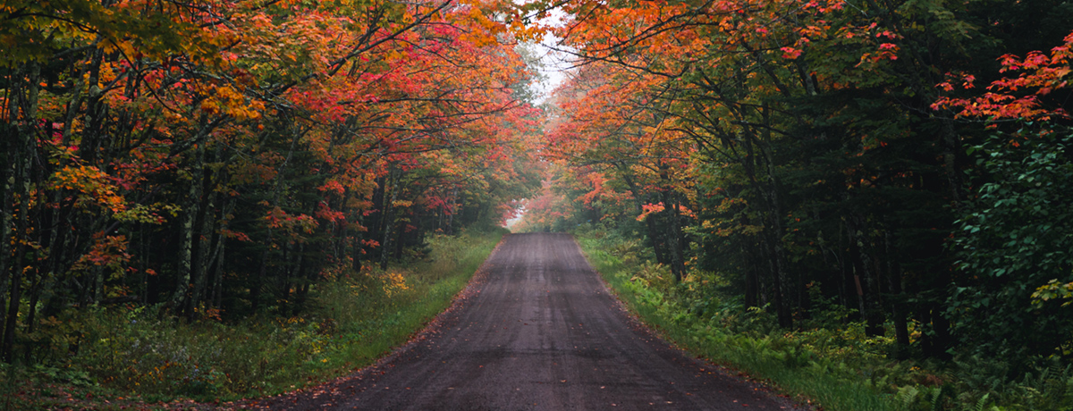 Fall colors along road in norther Minnesota